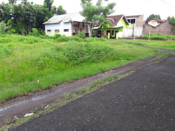 Tanah Cungking Strategis Murah -propertybanyuwangi (2)